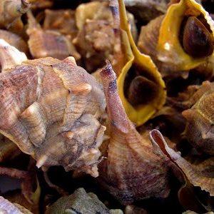 Le Crocette | piatto di molluschi tipico di Ancona